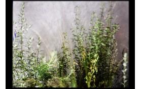 Προβολή της ταινίας μικρού μήκους της Cécile Clos «Ένας κήπος στην πόλη. Ένα κενό για μια παύση»
